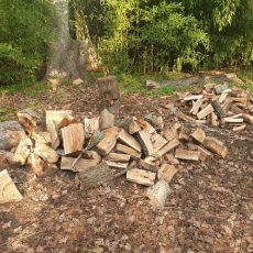 sc-blog-2019-jonkershoek-treefelling-005