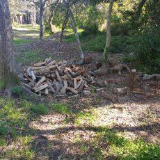 sc-blog-2019-jonkershoek-treefelling-027